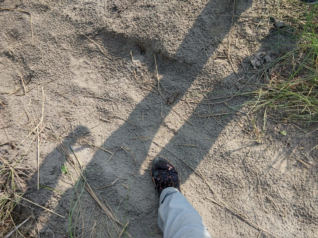 Conservation biologist's shoe pointing out a tiger footprint in the dirt
