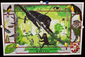 community baboon sanctuary poster - full
