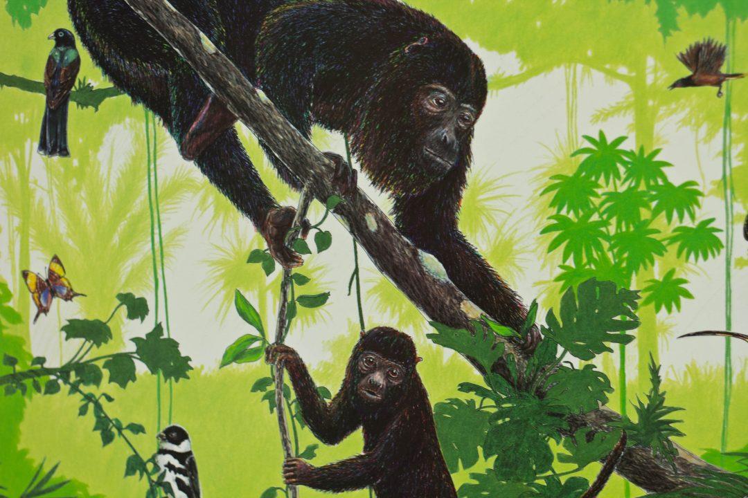 community baboon sanctuary poster